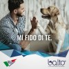 Balto_1.jpg